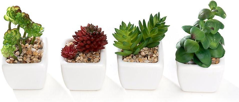 Nattol Artificial Mini Succulent Plants Potted in Cube-Shaped Black Ceramic Pots for Home D/écor Set of 4