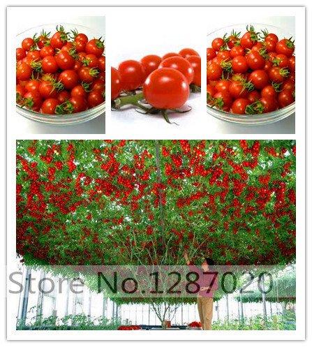 100 escalade tomate Graines d'arbres et 300 graines escalade de fraises de qualité, fruits et légumes graines acheter directe de-china