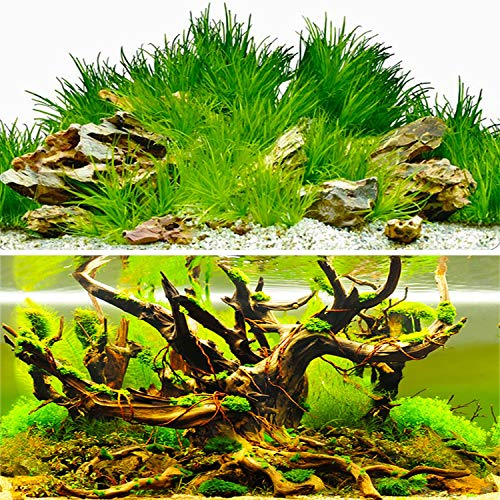 Amalong New Grass, Stones, Tree Background,Aquarium Background Decoration 25 x 15(inch)