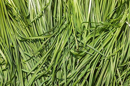 7780mg BIO Graines ~ Ciboulette Ail Asian Garden ~ légumes coréenne Buchukimchi