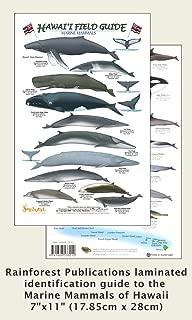 Hawaii Marine Mammal Identification Guide (Laminated Single Sheet Field Guide) (Hawaii Field Guides)