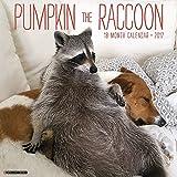 Pumpkin the Raccoon 2017 Wall Calendar
