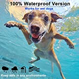 Zoom IMG-1 collare antipulci cane per cani
