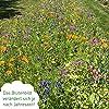 Bienenwiese Blumenmischung, 100g Premium Bienen Saatgut für bunte Bienenweide, Bienen und Hummelmagnet von OwnGrown, bienenfreundliche Blumensamen, Bienensaatgut ein- und mehrjährig #2