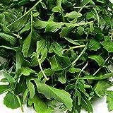 Semillas de rúcula ► orgánico Certificado de no-GMO rúcula (Roquette o Rocket) Semillas (200 + Seeds)