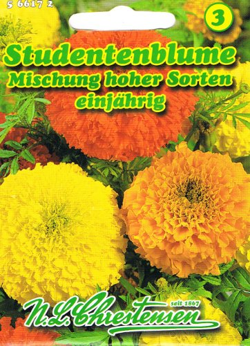 Studentenblumen Mischung hoher Sorten Tagetes erecta plena