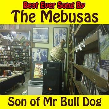 Son of Mr. Bull Dog