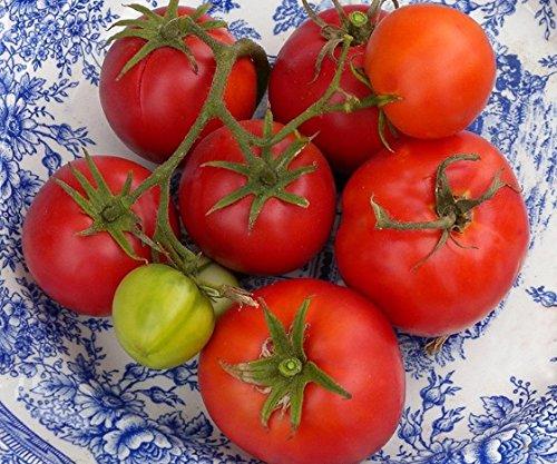 5 paquets de 25 graines Marglobe améliorée - Graines de tomate Heirloom biologique