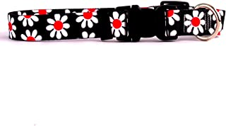 Best daisy dog black Reviews