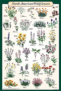 Picture Peddler North American Wildflowers Educational Science Reference Chart Print Poster 24x36