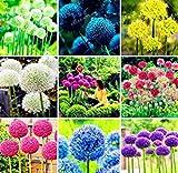 Adolenb Jardin- Corolle ornementale géante étoile boule poireau Le lis aux fleurs Allium vivace plante herbacée abeille-friendly pour balcon, jardin 10/20/50/100 (10pcs) (100PCS)