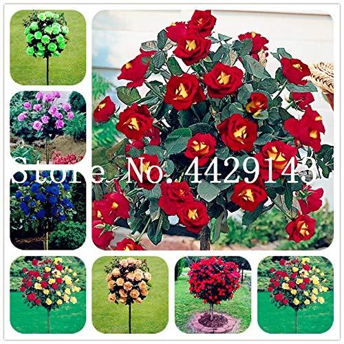 100 Stück Seltener Rosenbaum Blume Mini Rose Rose Tree Mini Bonsai Kletterrose Blume Bonsai für Hausgarten: gemischt