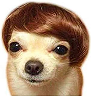 wig for cat