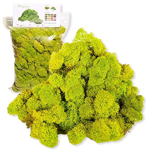 Liquen Preservado Premium 500 gr. Color Verde Manzana (Verde Acido). Uso: Cuadros Vegetales Preservados, Diorama, Presepio, Modelismo. Musgo Preservado.