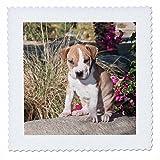 3dRosein American Pitt Bull Terrier Puppy