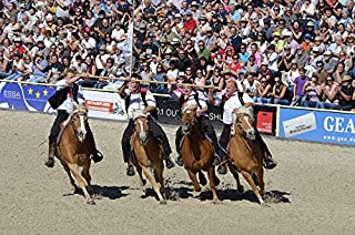 Home Comforts Peel-n-Stick Poster of Human Games Haflinger Western Serenity Gallop Vivid Imagery Poster 24 x 16 Adhesive Sticker Poster Print
