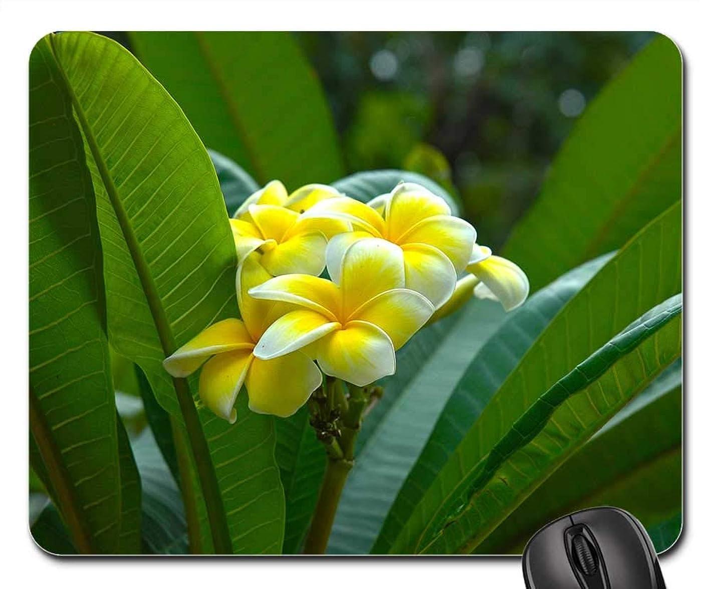 Mouse Pads - Blossom Bloom Flower Yellow Frangipani Plumeria