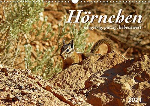 Hörnchen - neugierig, putzig, liebenswert (Wandkalender 2021 DIN A3 quer)