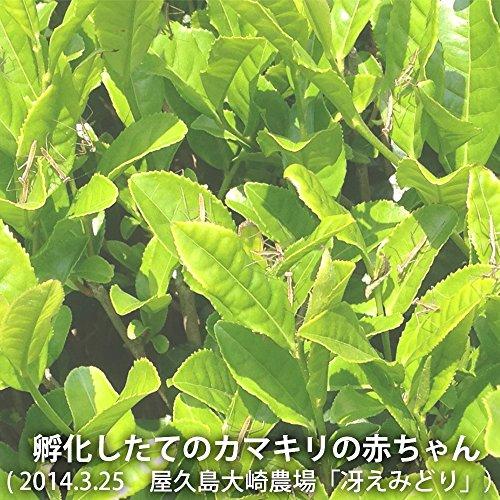 深山園『無農薬煎茶深山の露』
