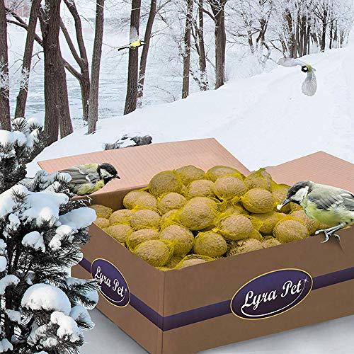 Lyra Lot de 200 boules de graisse (18 kg) avec filet pour oiseaux sauvages pour toute l'année, fourrage