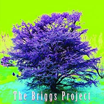 THE BRIGGS PROJECT