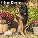 Belgian Shepherd 2016 Calendar
