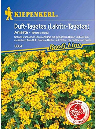 Tagetes lucida Anistagetes Anisata Lakritz-Tagetes