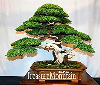 Big Sale!10 Seed/Pack juniper bonsai tree potted flowers office bonsai purify the air absorb harmful gases,#NPKQEP