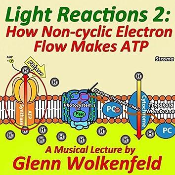 Light Reactions 2: How Non-Cyclic Electron Flow Makes Atp