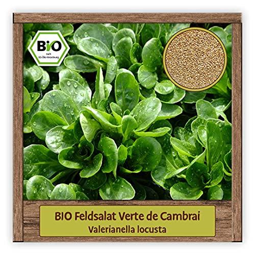 BIO Feldsalat Samen winterhart Sorte VERTE DE CAMBRAI Salat Samen Gemüse Saatgut Wintersalat