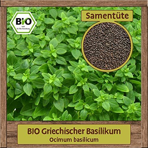 Samenliebe BIO Kräuter Samen Basilikum Griechischer (Ocimum basilicum) | BIO Basilikumsamen Kräutersamen | Samenfestes BIO Saatgut für 2m²