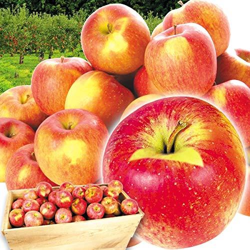国華園 りんご 青森産 ご家庭用 葉とらずふじ 木箱 約20� 1箱 食品