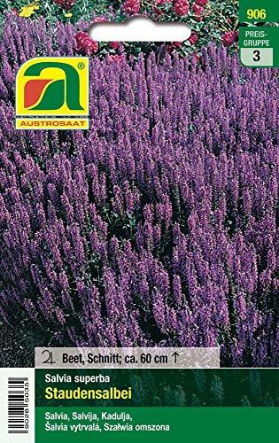 Austrosaat 906 Staudensalbei Salvia superba (Staudensalbeisamen)