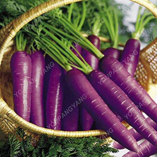 200pcs pourpre graines de carotte arc-en-Anti-âge Plantes ginseng Bonsai sain sucre organique semences potagères pour jardin Bourgogne