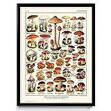 Pilz-Illustration Vintage Print 3 – Pilz-Poster –