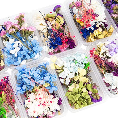 SHIER Kunstblumen 1 Box Real Mix Dried Flowers for Resin Jewellery Dry Plants Pressed Flowers Making Craft DIY Accessories,Random 1 Box