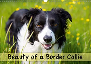 Beauty of a Border Collie (Wall Calendar 2020 DIN A3 Landscape): Portraits of a beautiful Border Collie dog in various out...