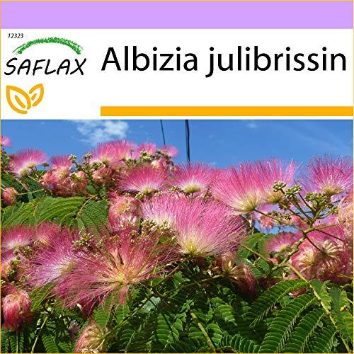 SAFLAX - Schlafbaum - 50 Samen - Albizia julibrissin