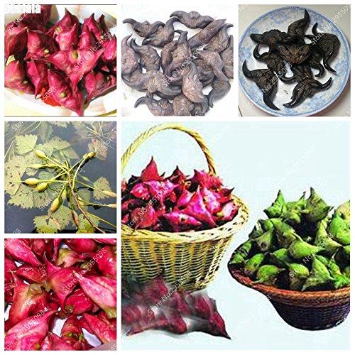 80pcs / bag Italienische Wasser-Kastanie Samen im Freien Juicy Nutrien Obst Bonsai Topfgarten Zierpflanze für Blumentopf