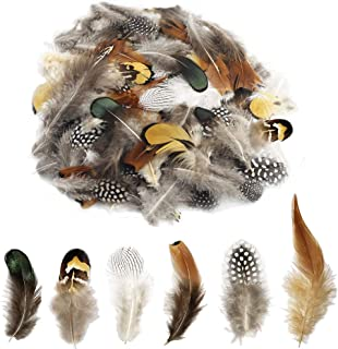6 Styles of Natural Pheasant Feathers 180 Pcs Suitable for Hats Accessories, Various Manual DIY, Dream Catcher Decoration, Wedding and Birthday Party Dress-ups