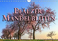 Pfaelzer Mandelblueten (Wandkalender 2022 DIN A4 quer): Ein Spaziergang in Bildern durch die Pfalz im Mandelbluetenkleid (Monatskalender, 14 Seiten )