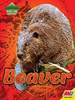 Beaver (Backyard Animals)