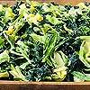 九州産 乾燥野菜オールグリーンミックス (1kg×5)