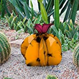Debouor Mini Metal Saguaro Cactus Ornament, DIY Mexican Cactus Torch Sculpture, Decorative Desert Plants Statue&Figurine, Indoor Modern Home Outdoor Yard Art Lawn Garden Decor (B, Yellow)