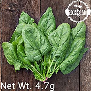 Gaea's Blessing Seeds - Organic Giant Winter Spinach Seeds 300+ Seeds Non-GMO Open-Pollinated Heirloom, 95% Germination Rate, Net Wt. 4.5g