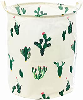 Best cactus for room Reviews