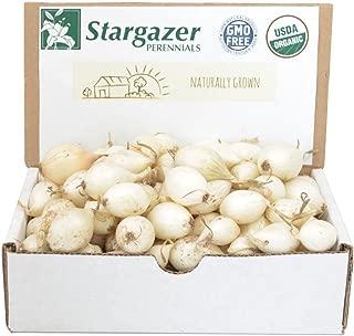 Stargazer Perennials White Ebenzer Onion Sets 8 oz | Organic Heirloom Non-GMO Bulbs - Easy to Grow