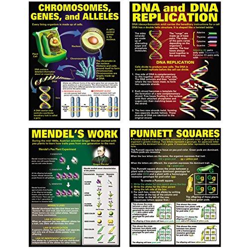 McDonald Publishing DNA & Heredity Poster Set
