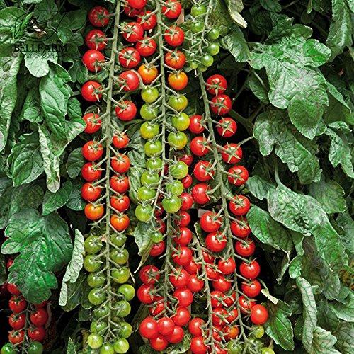 Pinkdose2018 heißer Verkauf Davitu Tomate