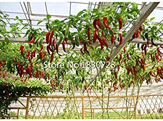 Seed Germinators Vegetable Seed 100 Seeds/Pack Vegetables and Fruit Seeds Pepper Tree Seeds Chili Tree Flower Bonsai Plants Seeds for Home & Garden